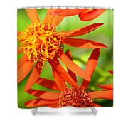 Fall Orange Flowers Shower Curtain