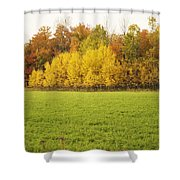 Fall Poplars Shower Curtain