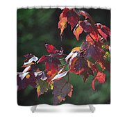 Fall Red Shower Curtain