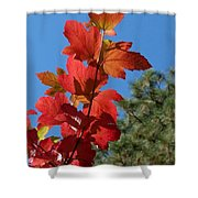 Fall Snowball Branch Shower Curtain