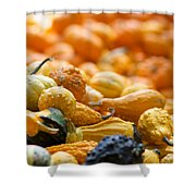 Fall Squash Variety Shower Curtain