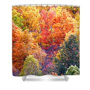 Fall Trees 3 Shower Curtain