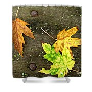 Fall Trio Shower Curtain
