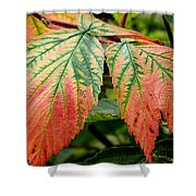 Fall Veins Shower Curtain