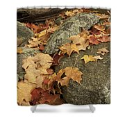 Fallen Autumn Sugar Maple Leaves Shower Curtain