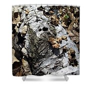 Fallen Birch Shower Curtain