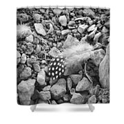 Fallen Feathers Black And White Shower Curtain