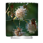 Fallen Flowers Shower Curtain