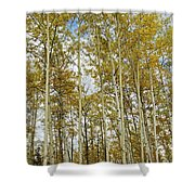 Falling For The Birch And Aspens Shower Curtain