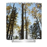 Falling Sunlight Fort Mcmurray Shower Curtain