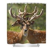 Fallow Deer Dama Dama Stags Shower Curtain