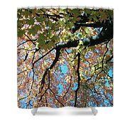 Falls Coming Shower Curtain