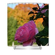 Fall's Final Rose Shower Curtain