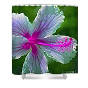 Fanciful Hibiscus Shower Curtain