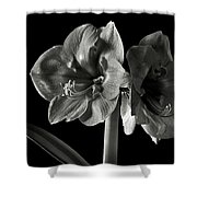 Fancy Amaryllis In Black And White Shower Curtain