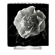 Fancy Camellia In Black And White Shower Curtain