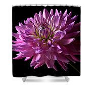Fancy Dahlia Shower Curtain