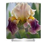 Fancy Dancy Iris Shower Curtain