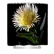 Fancy Ice Plant Shower Curtain