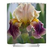 Fancy Iris Dance Ruffles Shower Curtain