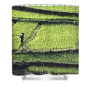 Farmer In Rice Paddy, Elevated View Shower Curtain
