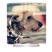 Airedale On The Fashion Runway Shower Curtain