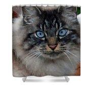 Fat Cats Of Ballard 9 Shower Curtain