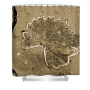 Faux Fossil Shower Curtain