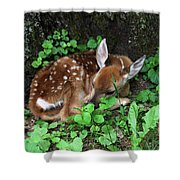 Fawn 2292 Shower Curtain