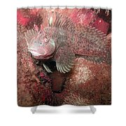 Feather Blenny Female Shower Curtain