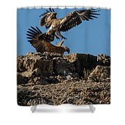Feather Fluster Shower Curtain