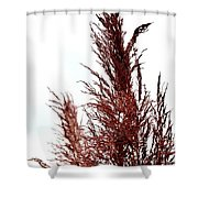 Feather Top Shower Curtain