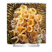 Featherduster Shower Curtain