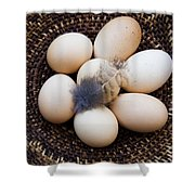 Feathered Eggs Shower Curtain