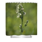 Feathery Reed Canary Grass Vignette Shower Curtain