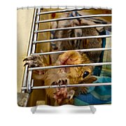 Feed Me Now Shower Curtain