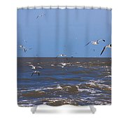 Feed Us - Ferry To Galveston Tx Shower Curtain by Susanne Van Hulst