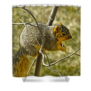 Feeding Tree Squirrel Shower Curtain
