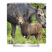 Female And A Three Weeks Old Moose Shower Curtain