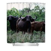 Female Cape Buffalo Syncerus Caffer Shower Curtain