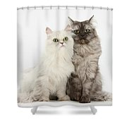 Female Cats Shower Curtain