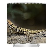 Female Desert Spiny Lizard  Shower Curtain