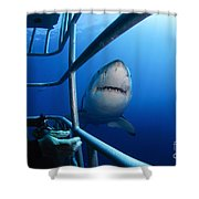 Female Great White And Underwater Shower Curtain