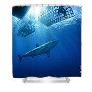 Female Great White With Cages Shower Curtain