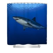 Female Great White With Remora Shower Curtain
