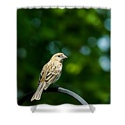 Female House Finch Perched Shower Curtain