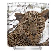 Female Leopard Close-up Shower Curtain