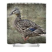 Female Mallard Duck Low Saturation Shower Curtain