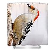 Female Red-bellied Woodpecker 2 Shower Curtain