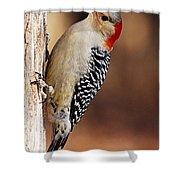 Female Red-bellied Woodpecker 5 Shower Curtain